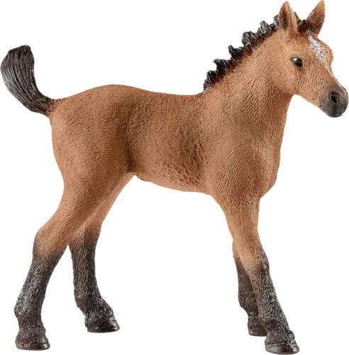 Quarter Horse Fohlen (13854)