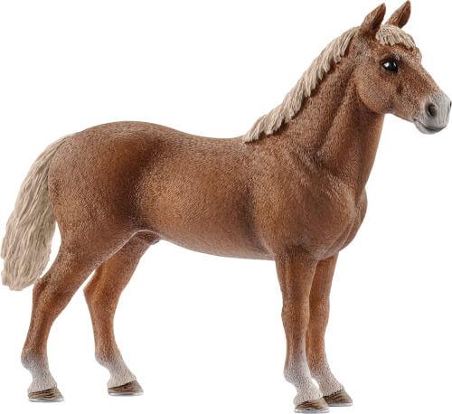 Morgan Horse Hengst (13869)
