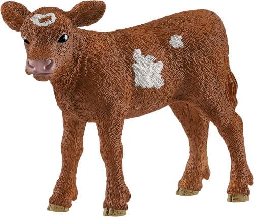 Texas Longhorn Kalb (13881)