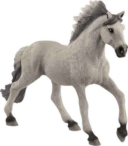 Sorraia Mustang Hengst (13915)