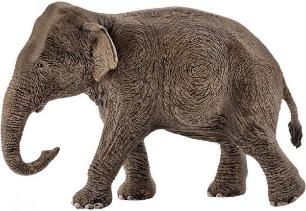 Asiatische Elefantenkuh (14753)