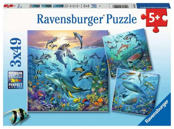 Puzzle Tierwelt des Ozeans