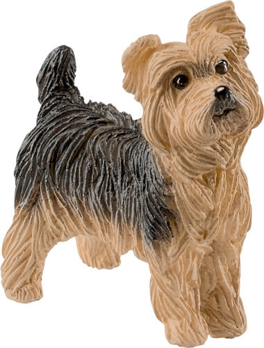 Yorkshire Terrier (13876)