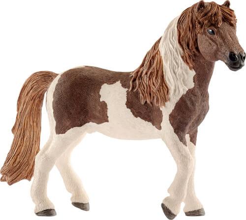 Island Pony Hengst (13815)